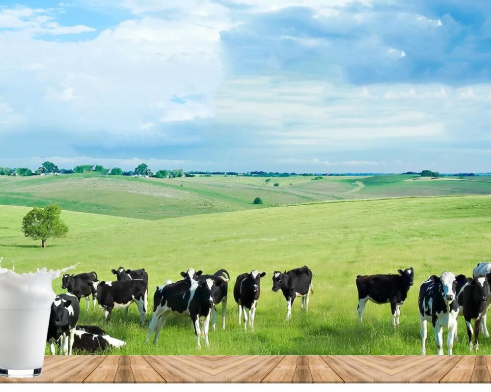 Pure and natural cow Milk